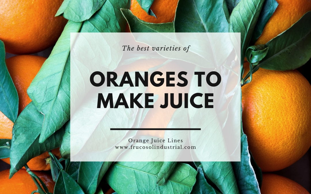 The best varieties of oranges to make juice